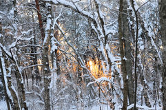 Paisaje del invierno con puesta del sol en el bosque Imágenes de archivo libres de regalías