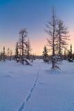 Paisaje del invierno con salida del sol Fotos de archivo libres de regalías