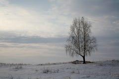 Paisaje del invierno con un árbol de abedul solitario Fotografía de archivo libre de regalías