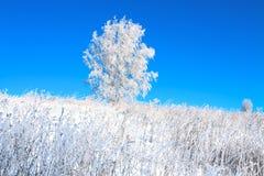 Paisaje del invierno con un árbol solo en un campo y el cielo azul Foto de archivo