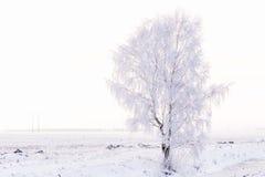 Paisaje del invierno con un abedul solo en escarcha Fotos de archivo libres de regalías