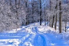 Paisaje del invierno con un camino en el bosque Fotografía de archivo libre de regalías