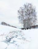 Paisaje del invierno con una cala congelada y abedules Imagenes de archivo