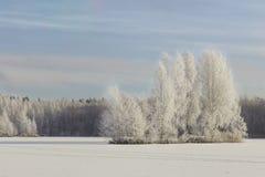 Paisaje del invierno con vistas del lago congelado Fotografía de archivo