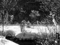 Paisaje del invierno del cuento de hadas en blanco y negro Imagen de archivo libre de regalías