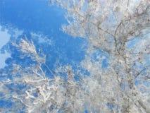 Paisaje del invierno, día escarchado Las patas mullidas del abedul son Imagen de archivo