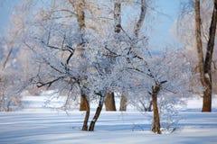 Paisaje del invierno Día frío foto de archivo
