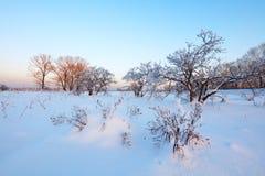 Paisaje del invierno Día frío fotos de archivo libres de regalías