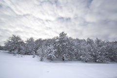 Paisaje del invierno de la Navidad Imagen de archivo