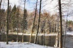 Paisaje del invierno de la nieve del abedul de los árboles al aire libre Fotos de archivo libres de regalías
