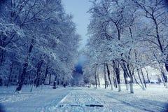 Paisaje del invierno de la noche en parque de la ciudad Imagen de archivo