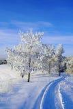 Paisaje del invierno de la tarde Imagen de archivo libre de regalías