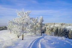 Paisaje del invierno de la tarde Fotos de archivo libres de regalías