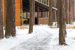 Paisaje del invierno de la trayectoria entre los árboles de pino foto de archivo