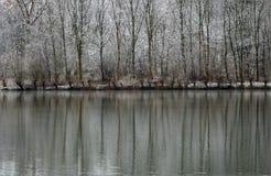Paisaje del invierno de los árboles nevados que reflejan en el lago Imágenes de archivo libres de regalías