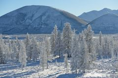 Paisaje del invierno de Oymyakon Yakutia, Rusia imagenes de archivo
