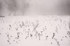 Paisaje del invierno de un campo escarchado en un fondo de niebla Fotos de archivo