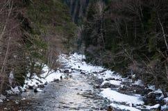 Paisaje del invierno de un río de la montaña con nieve a lo largo del río de la costa en el bosque del pino en el Cáucaso Rusia Fotos de archivo