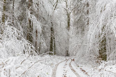 Paisaje del invierno del bosque natural con los robles Fotografía de archivo