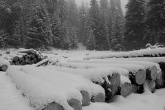 Paisaje del invierno del Bw Fotos de archivo libres de regalías