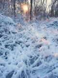 Paisaje del invierno del parque de Allerton Imágenes de archivo libres de regalías