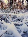 Paisaje del invierno del parque de Allerton Fotos de archivo libres de regalías
