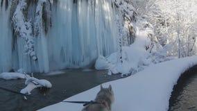 Paisaje del invierno del puente del bosque a través del río con la cascada grande del hielo metrajes