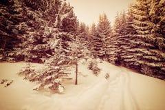 Paisaje del invierno del vintage Fotografía de archivo
