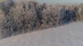 Paisaje del invierno en campo almacen de video