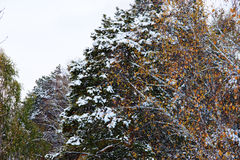 Paisaje del invierno en día melancólico con las ramas del abedul borrosas en th Imagen de archivo libre de regalías