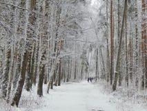 Paisaje del invierno en el bosque Imágenes de archivo libres de regalías