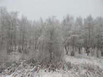 Paisaje del invierno en el bosque Foto de archivo