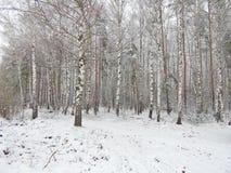 Paisaje del invierno en el bosque Fotos de archivo