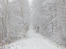 Paisaje del invierno en el bosque Imagen de archivo libre de regalías