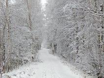 Paisaje del invierno en el bosque Foto de archivo libre de regalías