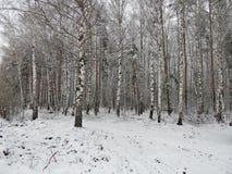 Paisaje del invierno en el bosque Imagenes de archivo