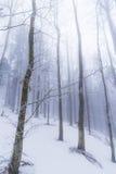 Paisaje del invierno en el bosque con los árboles y la niebla de abedul Imagen de archivo