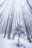 Paisaje del invierno en el bosque con los árboles y la niebla de abedul Fotografía de archivo
