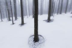 Paisaje del invierno en el bosque con los árboles y la niebla de abedul Foto de archivo libre de regalías