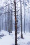 Paisaje del invierno en el bosque con los árboles y la niebla de abedul Fotos de archivo libres de regalías