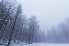 Paisaje del invierno en el bosque con los árboles y la niebla de abedul Imágenes de archivo libres de regalías