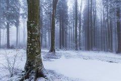 Paisaje del invierno en el bosque con los árboles y la niebla de abedul Foto de archivo