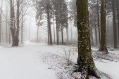 Paisaje del invierno en el bosque con los árboles y la niebla de abedul Imagenes de archivo