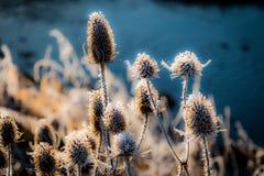 Paisaje del invierno en el campo foto de archivo libre de regalías