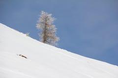 Paisaje del invierno en el Mt Dobratsch Foto de archivo libre de regalías