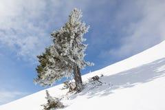 Paisaje del invierno en el Mt Dobratsch Imagen de archivo libre de regalías