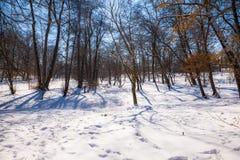 Paisaje del invierno en el parque Imagen de archivo