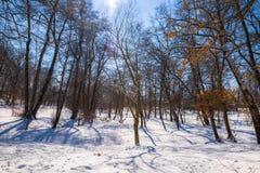 Paisaje del invierno en el parque Fotos de archivo