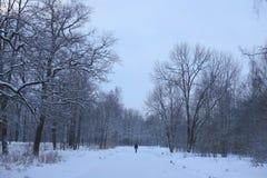 Paisaje del invierno en el parque Fotos de archivo libres de regalías