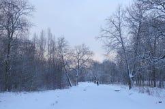 Paisaje del invierno en el parque Foto de archivo libre de regalías